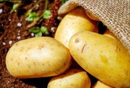 סלט תפוחי אדמה עם בשר כבוש